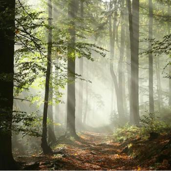 Forest retreat England